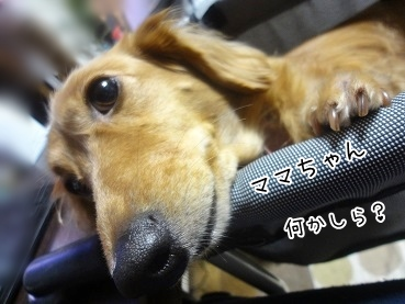kinako3311.jpg