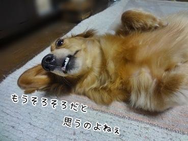 kinako3322.jpg