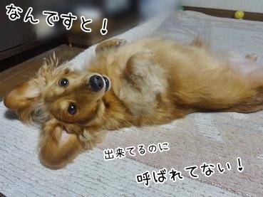 kinako3325.jpg
