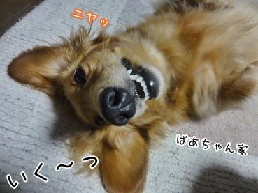 kinako3326.jpg