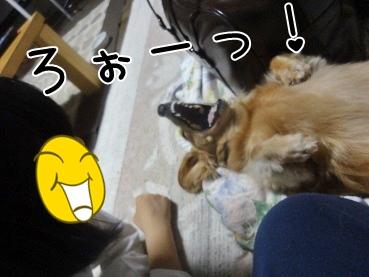 kinako3334.jpg