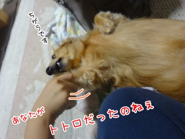 kinako3335.jpg