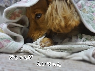 kinako3353.jpg