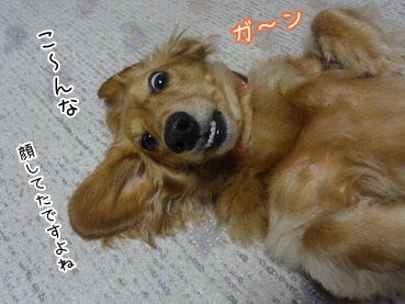 kinako3362.jpg