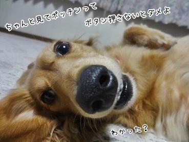 kinako3364.jpg