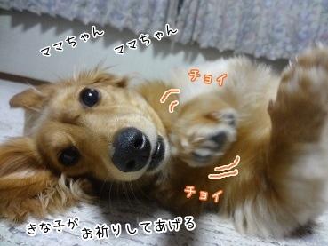 kinako3365.jpg