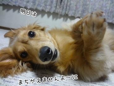 kinako3366.jpg