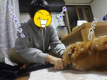 kinako3368.jpg