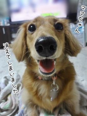 kinako3371.jpg