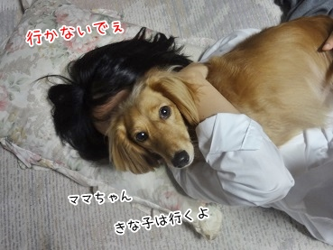kinako3373.jpg