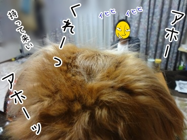 kinako3396.jpg