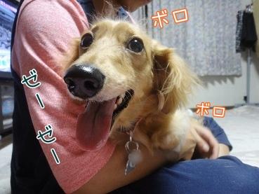 kinako3405.jpg