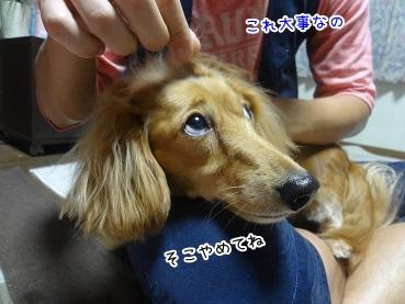 kinako3407.jpg