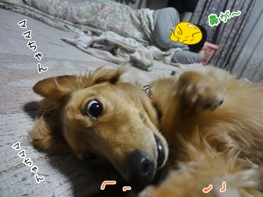 kinako3409.jpg