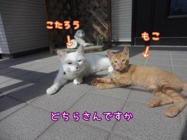 kinako3423.jpg