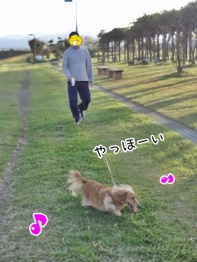 kinako3424.jpg
