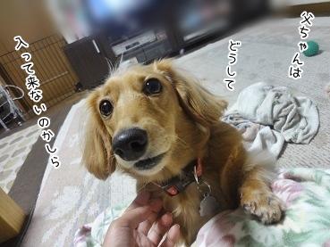 kinako3429.jpg