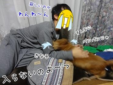 kinako3439.jpg