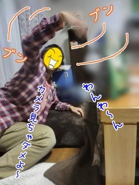 kinako3447.jpg