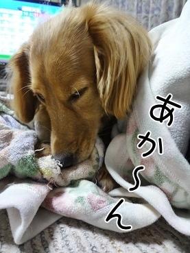 kinako3450.jpg