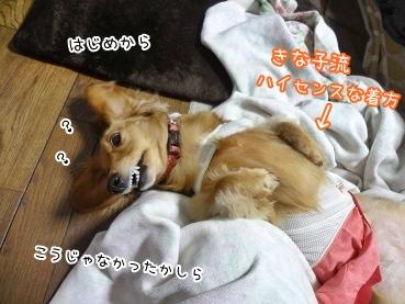 kinako3485.jpg