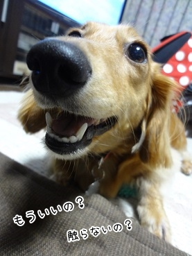 kinako3496.jpg