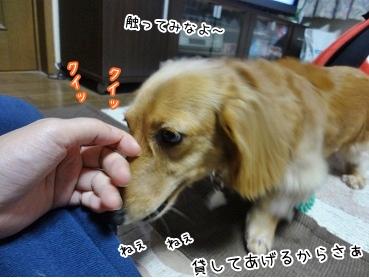 kinako3497.jpg