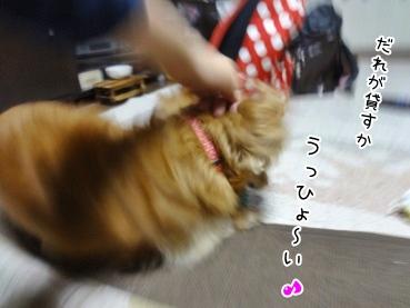 kinako3498.jpg