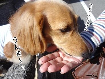 kinako3517.jpg