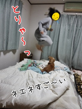 kinako3524.jpg