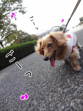 kinako3527.jpg