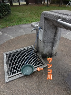 kinako3535.jpg