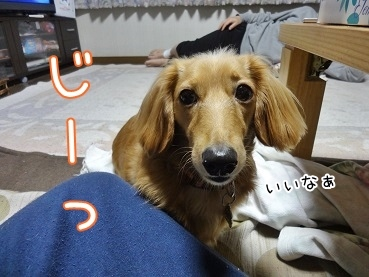 kinako3538.jpg