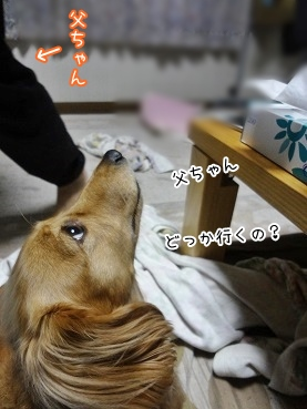 kinako3540.jpg