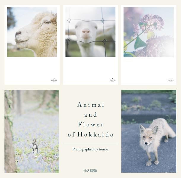 postcard_animal.jpg