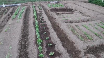 2015.10.4菜園35