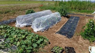 2015.9.19菜園11