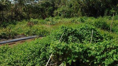 2015.9.20菜園18