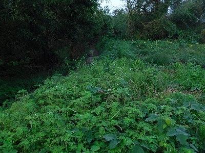 2015.9.26開墾地2