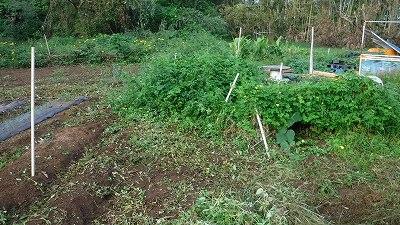 2015.9.27菜園12