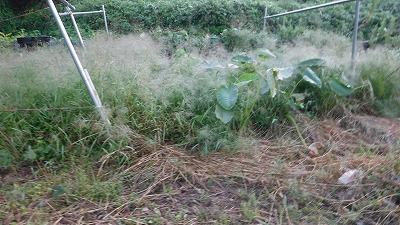 2015.10.4菜園10