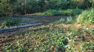 2015.10.4菜園12