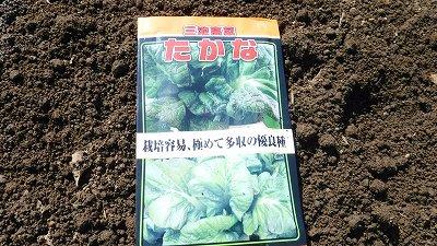 2015.10.4菜園26