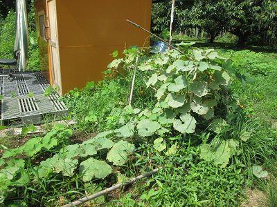2015.8.22菜園