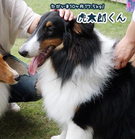 kotaro-S.jpg