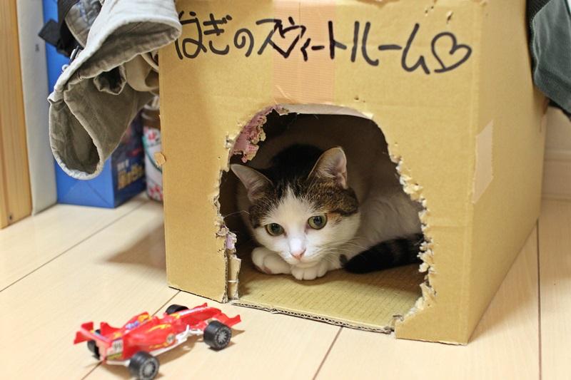 nobunobu12300712.jpg