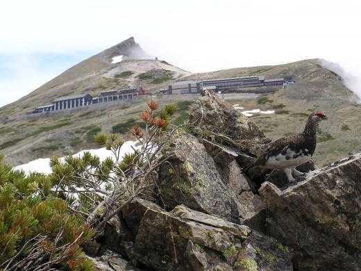 山荘とオスライチョウ
