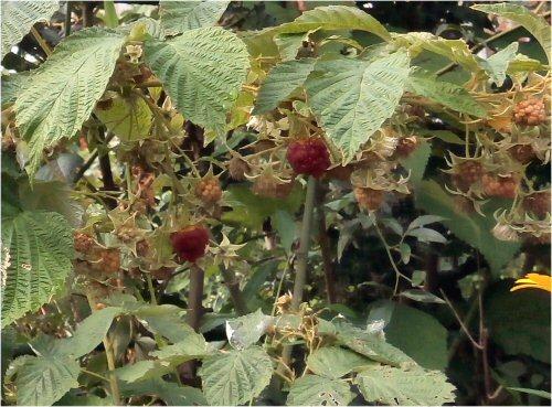 04 500 20150824 2回目のraspberry