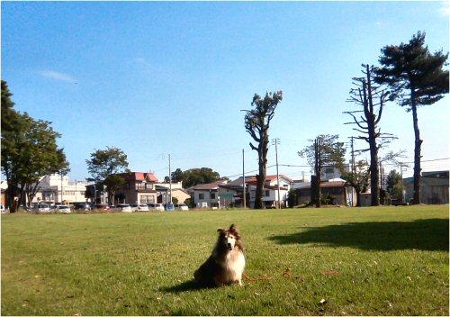 03 500 20150828 剪定済み芝生公園 Erie01