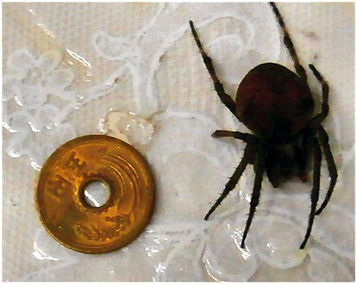 01 500 20150910 spider